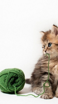 What Should You Look For In A Cat Food Brand