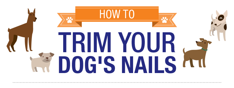 HOW TRIM YOUR DOGS NAILs