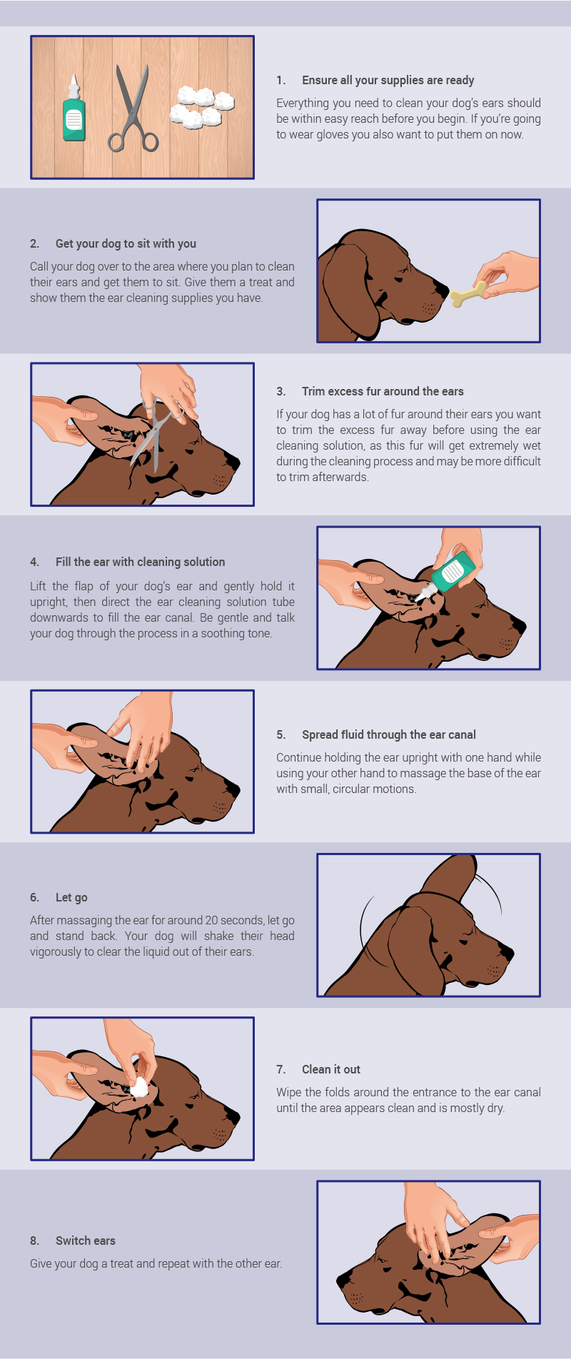 Step by step: How to clean dog ears by Montego.