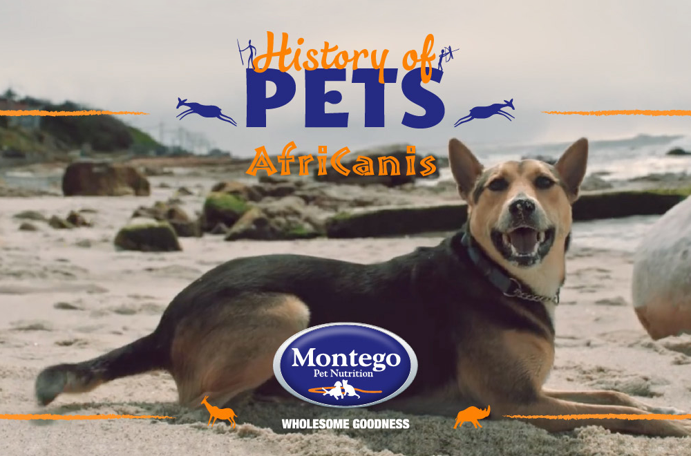 Blog - History of the Africanis