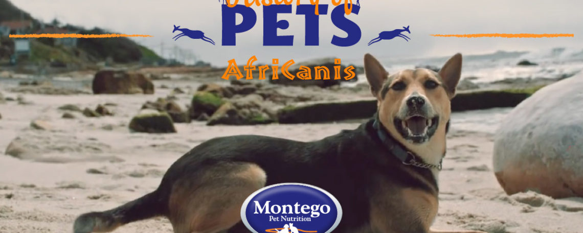 History of Pets The Africanis