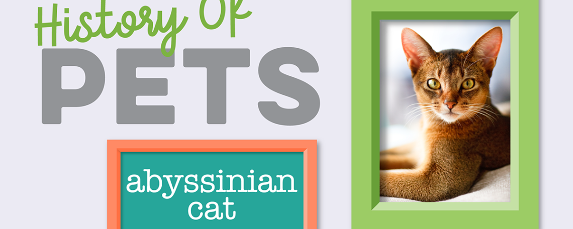 Abyssinian Featured Image