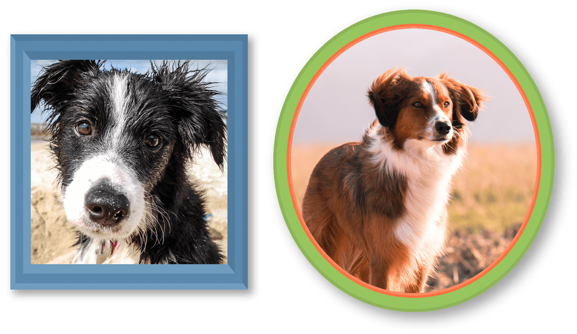 History of Pets | The Border Collie | Montego Pet Nutrition