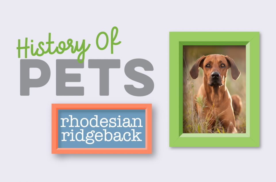 Blog - History of Pets - Ridgie