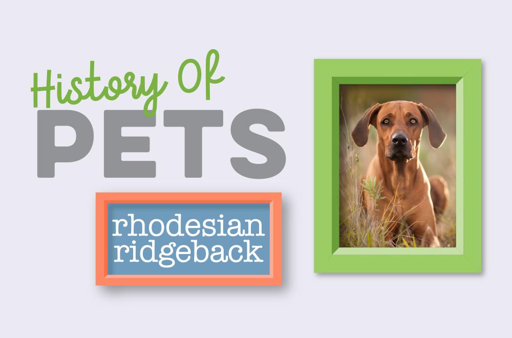 Blog - History of Pets - Ridgie