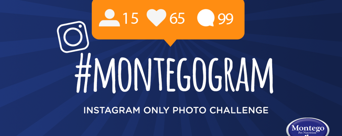 Montegogram PhotoChallenge