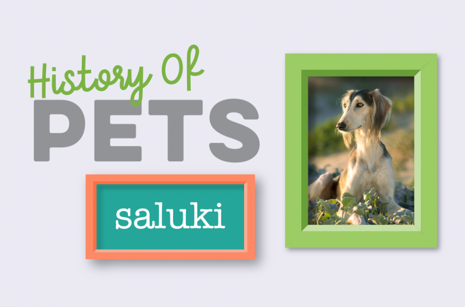 Blog - History of Pets - Saluki