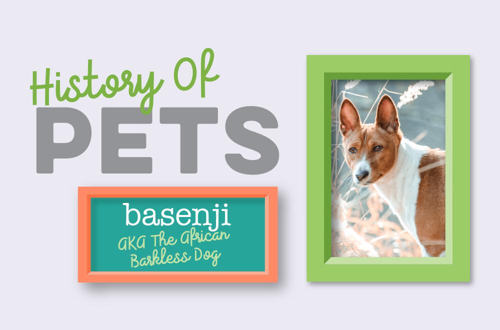 Blog - History of Pets - Basenji